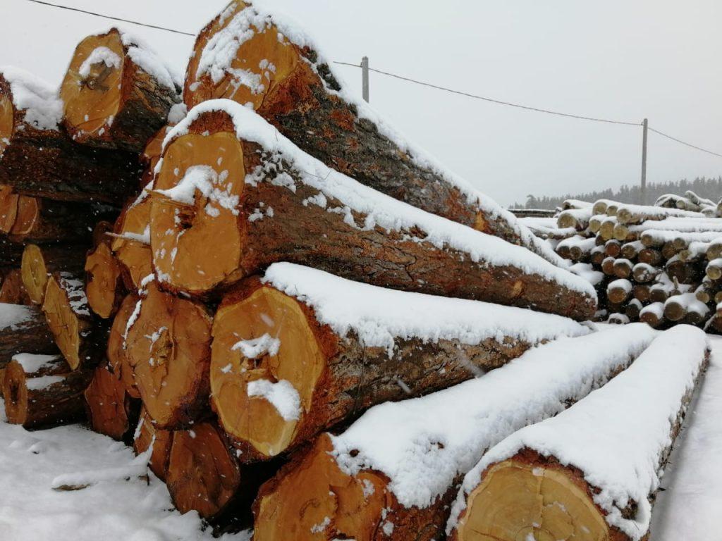 pjautines medienos tiekimas Lietuvoje
